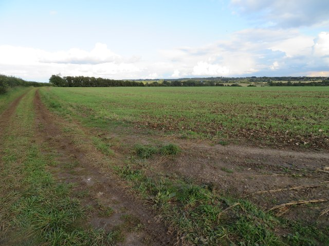 Field north of Maidenthorn Lane