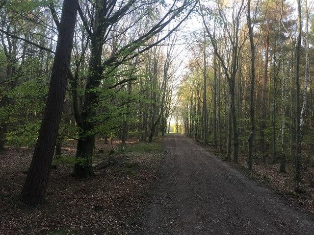 Logging road, Butterdean Wood