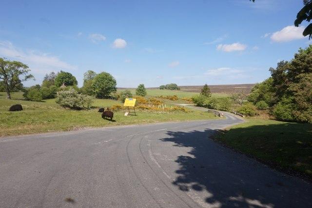 Anserdale Lane towards Hutton-le-Hole