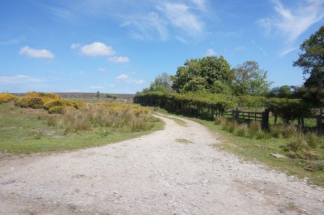 Footpath off Anserdale Lane