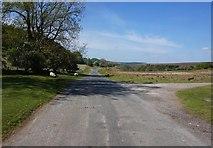 SE7190 : Anserdale Lane towards Hutton-le-Hole by Ian S