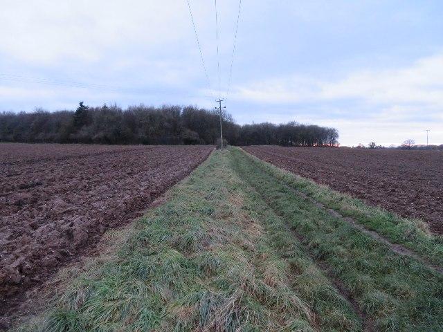 Bridleway towards Bull's Bushes Copse