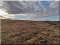 NH6235 : Scrub clearance above Drumashie Moor by valenta