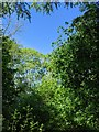 TF0820 : Above all, the clear blue sky by Bob Harvey