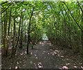 TF0820 : Woodland Nave by Bob Harvey
