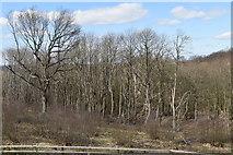 TQ6143 : Well Wood by N Chadwick