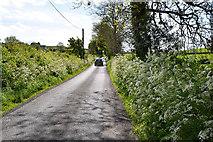 H6056 : Hemlock along Feddan Road by Kenneth  Allen