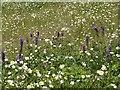 SK6143 : Gedling Country Park Wildlife – 9 by Alan Murray-Rust