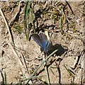 SK6143 : Gedling Country Park Wildlife – 13 by Alan Murray-Rust