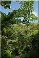 SX9365 : Walls Hill Road by Derek Harper