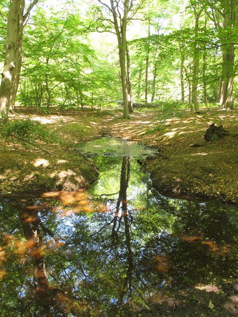 Last water in stream, Egypt Woods