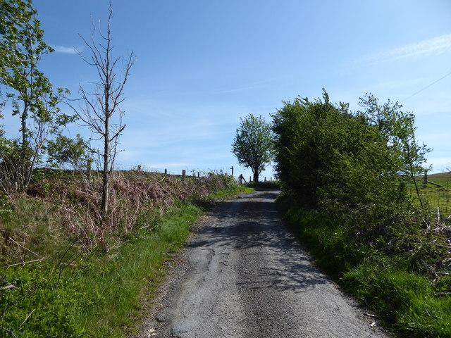 Lane at Springhill