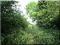 SK8140 : Rather overgrown bridleway, Normanton by Jonathan Thacker