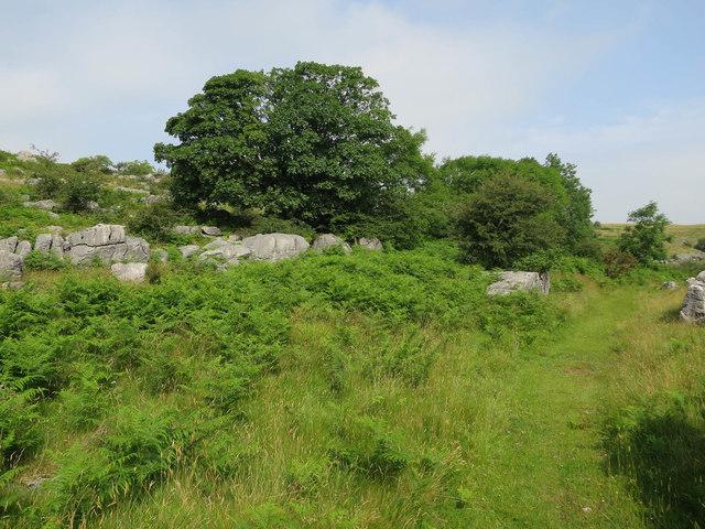 Path in Newbiggin Crags