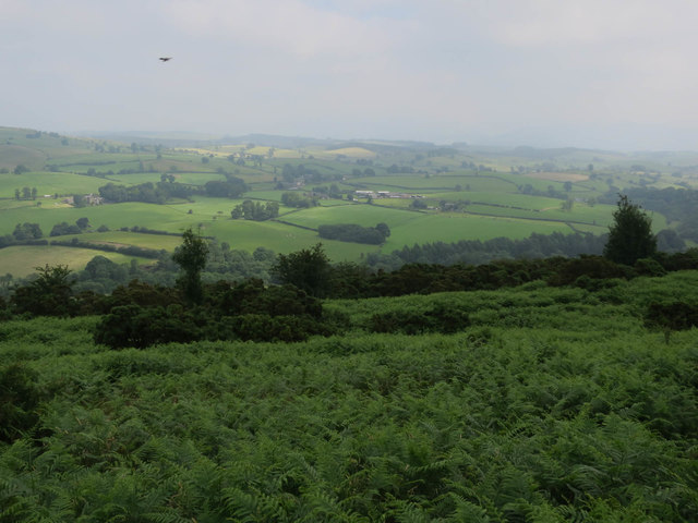 Looking down from Newbiggin Crags