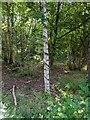 TF0820 : Tree vs Honeysuckle by Bob Harvey