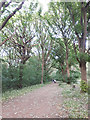 SE2436 : Path in Bramley Fall Woods by Stephen Craven