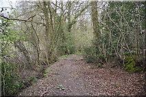 TQ6139 : Woodland path by N Chadwick
