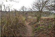 TQ6239 : Tunbridge Wells Circular Walk by N Chadwick