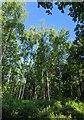 TF0820 : Blue sky above by Bob Harvey