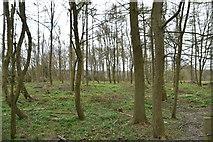 TQ6038 : High Wood by N Chadwick