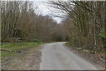 TQ6038 : High Woods Lane by N Chadwick