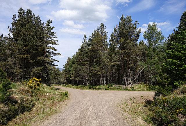 Track junction, Druim Bà Forest
