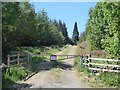 NZ0055 : Forest road into High Kellas Plantation by Oliver Dixon