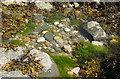 SX9363 : Rockpool, Meadfoot Beach by Derek Harper