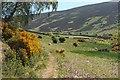 NT4534 : Track above Blakehope Burn by Jim Barton