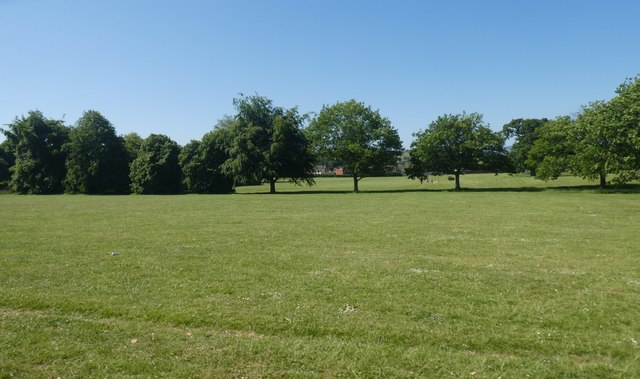 Line of trees in King George V recreation ground, Exeter