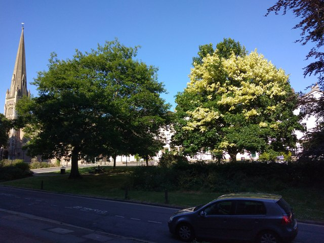 Evening sunshine on trees, Southernhay, Exeter