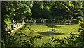 SX8963 : Pond, Cockington by Derek Harper