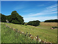 SP1806 : Valley of the River Leach near Sheepridge Farm by Vieve Forward