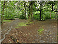 SE3136 : Gledhow Valley Woods by Stephen Craven