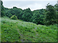 SE3136 : Clearing in Gledhow Valley Woods by Stephen Craven