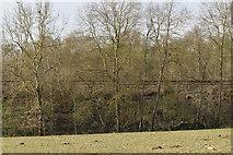 TQ5943 : The Hastings Line by N Chadwick