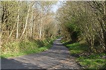 TQ5943 : Lane to Tonbridge by N Chadwick