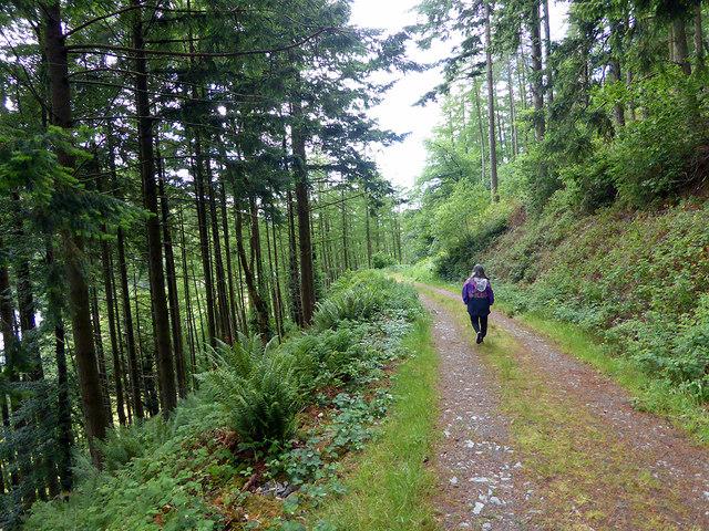 Walking in Coed Dol-fawr
