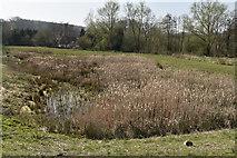 TQ5944 : Balancing pond by N Chadwick