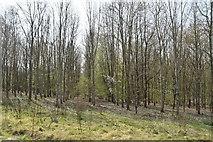 TQ6044 : May's Wood by N Chadwick
