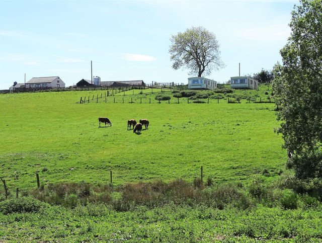 Grazing cattle at Hown's Farm