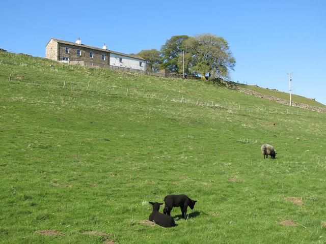 Fields below Far Hilltop