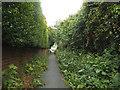 SE2533 : Path off Henconner Lane by Stephen Craven