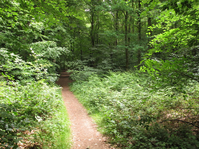 Bridleway in Prior's Grove beech woods