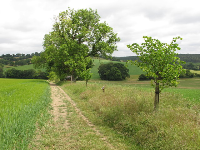 Jubilee Lime Walk of White Pond Farm