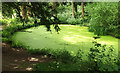 ST2232 : Pond, Fyne Court by Derek Harper