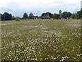 TQ5952 : Wild flowers on Shipbourne Common by Marathon