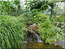 NJ9304 : Duthie Park: waterfall in the winter gardens by Stephen Craven