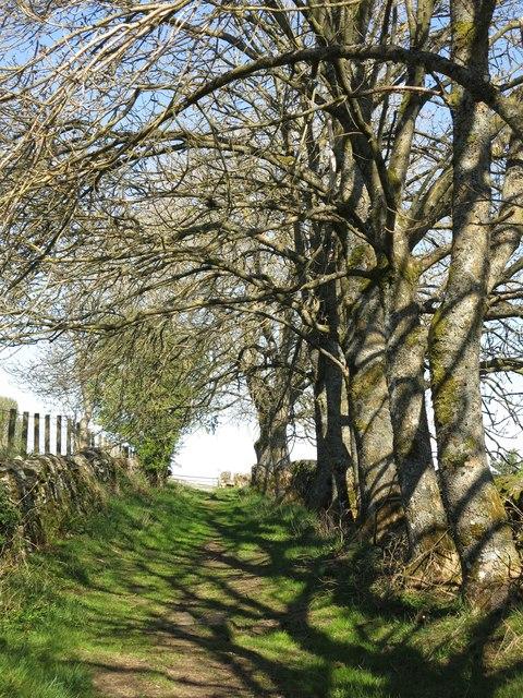 Bridleway above Gossipgate (2)